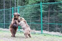 Резерват ведмедів