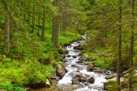Річка Прут неподалік витоків