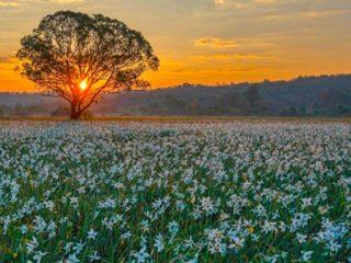 Екскурсійний тур «Цвітіння нарцисів і 7 чудес Закарпаття»